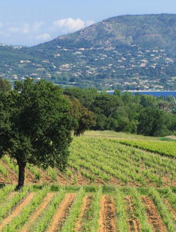 Terroir Evasion, Le vignoble Minuty de la presqu'île de Saint Tropez