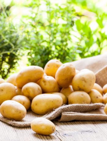 Pomme de terre Primeur en sac TerroirEvasion.com