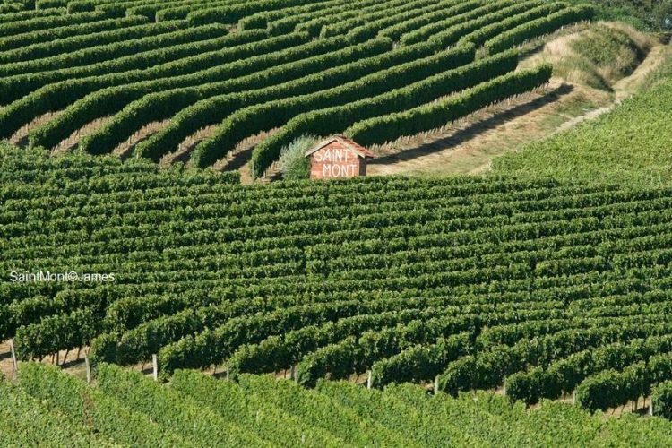 Vignoble Plaimont SaintMont Gascogne