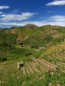 Vignobles coteaux banyuls collioure terres des templiers 1024x685