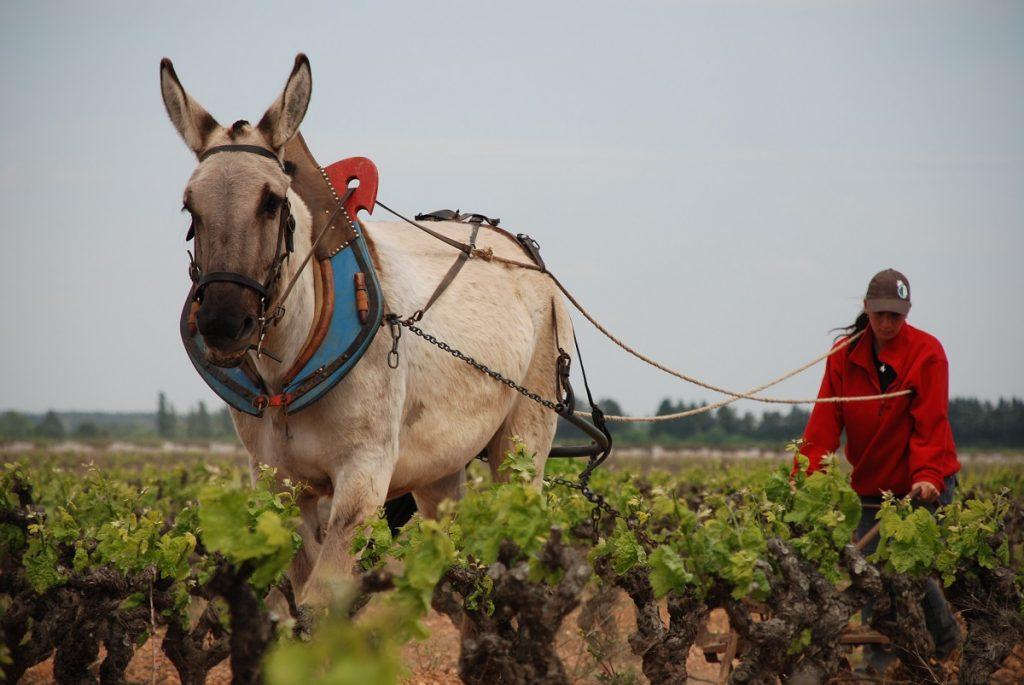 Scamandre Labour a cheval